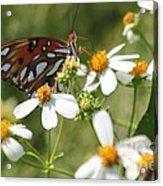 Butterfly 41 Acrylic Print