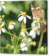 Butterfly 44 Acrylic Print