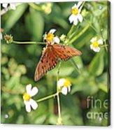 Butterfly 48 Acrylic Print