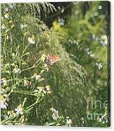 Butterfly 50 Acrylic Print