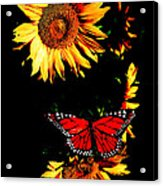 Butterfly And Sunflower Acrylic Print