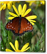 Butterfly And Yellow Flowers Acrylic Print