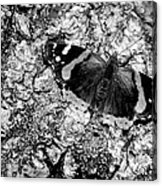 Butterfly Bark Black And White Acrylic Print