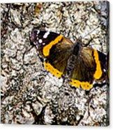 Butterfly Bark Acrylic Print