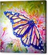 Butterfly Beauty 3 Acrylic Print