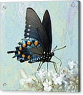 Butterfly Candy Acrylic Print
