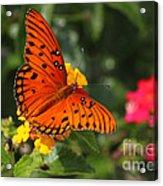 Butterfly Diaries IIi Acrylic Print