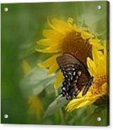 Butterfly Dream Acrylic Print
