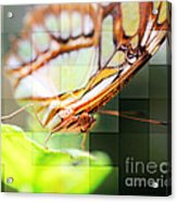 Butterfly Frosted Glass Acrylic Print