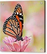 Butterfly Garden IIi Acrylic Print