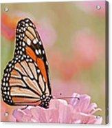 Butterfly Garden Iv Acrylic Print