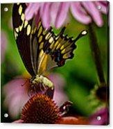 Butterfly Heaven Acrylic Print