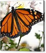 Butterfly In October Acrylic Print