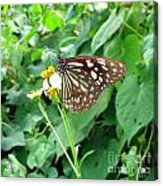 Butterfly In The Wild Acrylic Print