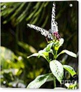 Butterfly Kisses Acrylic Print by Leslie Leda