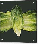 Butterfly Lettuce Acrylic Print