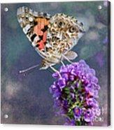 Butterfly Love Acrylic Print