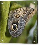 Butterfly On A Green Branch Niagara Acrylic Print