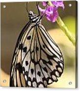 Butterfly On A Stem Acrylic Print