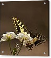 Butterfly On Blossom Flowers Acrylic Print