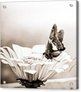 Butterfly On Flower Bw Acrylic Print