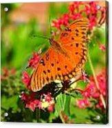Butterfly On Pentas Acrylic Print