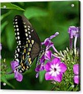 Butterfly On Purple Acrylic Print