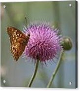 Butterfly On The Bloom Acrylic Print
