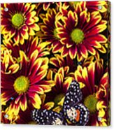 Butterfly On Yellow Red Daises  Acrylic Print