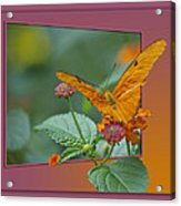 Butterfly Orange 16 By 20 Acrylic Print