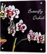 Butterfly Orchid Acrylic Print