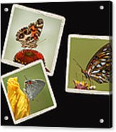 Butterfly Picture Page Collage Acrylic Print