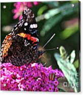 Butterfly Plant At Work Acrylic Print