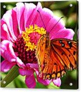 Butterfly Treat Acrylic Print