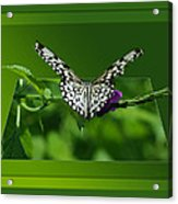 Butterfly White 16 By 20 Acrylic Print