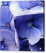 Butterfly Wing Blue Flowers Acrylic Print