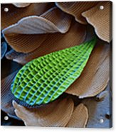 Butterfly Wing Scale Sem Acrylic Print