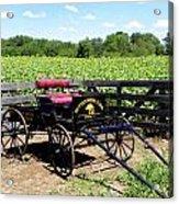 Buttonwood Farm Ct Usa Acrylic Print by Kim Galluzzo Wozniak