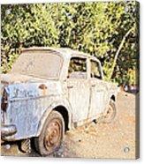 Buy Me Very Low Maintenace Acrylic Print by Kantilal Patel