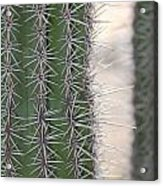 Cabo Cacti Before Acrylic Print
