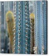 Cactus 14 Acrylic Print