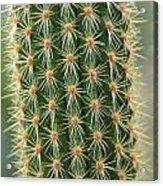 Cactus 19 Acrylic Print