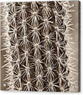 Cactus 19 Sepia Acrylic Print