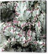 Cactus 58 Acrylic Print