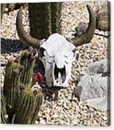 Cactus And Cow Skull Acrylic Print