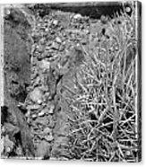 Cactus And Rocks Acrylic Print