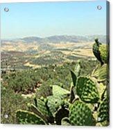 Cactus At Samaria Acrylic Print