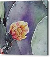 Cactus Bloom Acrylic Print by Regina Ammerman