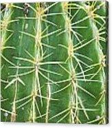 Cactus Close Trouble Acrylic Print