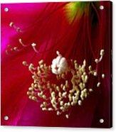 Cactus Flower Interior Acrylic Print